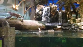 creatures of florida waterfall aquarium dania beach fl pokemon